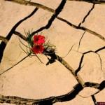قسوة وجفاف المشاعر الزوجية