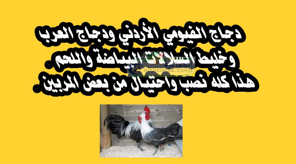 دجاج الفيومي الاردني دجاج العرب خليط السلالات البياضة هذا كله نصب واحتيال