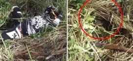قائد دراجة نارية يسقط فوق جحر ثعابين سامة بالفيديو