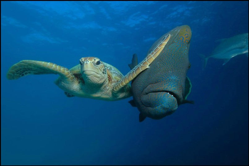 صراع تحت الماء