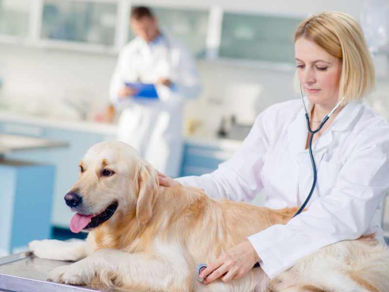 تعرف على 6 امراض تصيب الكلاب قبل شراء اي كلب