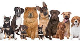 نصائح مهمة تساعد على نعومة شعر الكلاب