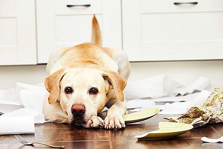 لماذا الكلاب تأكل الأورق والمنادل الورقية