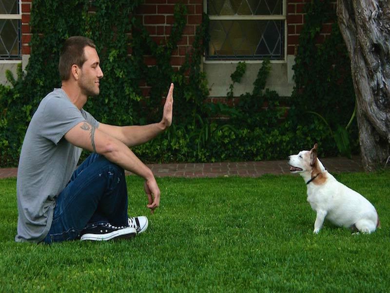 تدريب الكلب على الثبات با بوجي stay