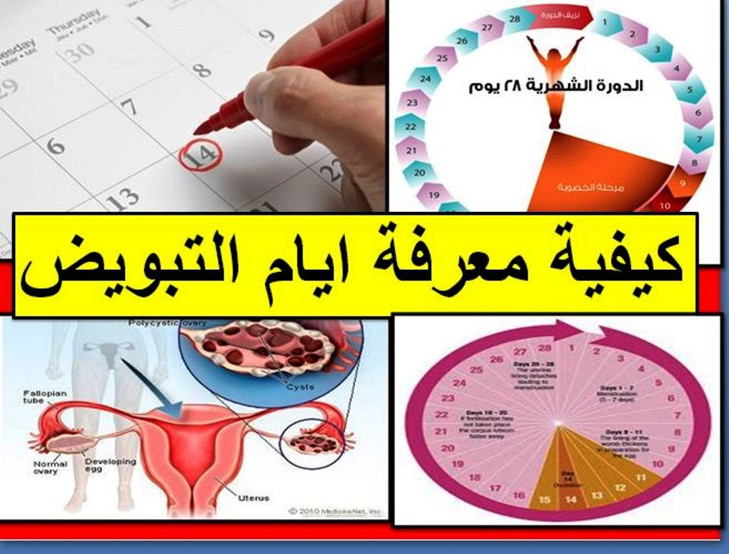 أعراض وقت التبويض عند المرأة وحسابة أيام التبويض بكل سهولة مدونة الشهادة التبزيض